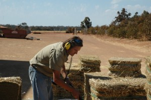 "Billy ""Blog Author"" Search Hay Bales"